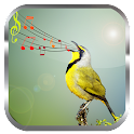 Birds Sounds Ringtones icon