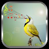 Birds Sounds Ringtones