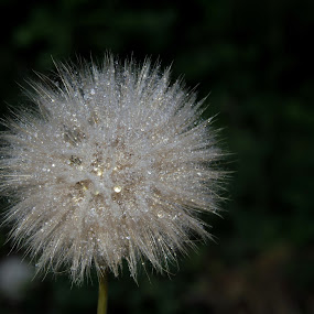 by Alen Poljak - Nature Up Close Flowers - 2011-2013