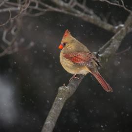 by Dennis Bartsch - Animals Birds