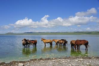 Photo: Lac aux chevaux - Les chevaux de notre hôte sont régulièrement primés dans les concours hippiques. Quand ils ne concourrent pas, ils batifolent gaiement dans le lac. J'avais pressé le pas pour les prendre pendant leur bain, mais je me suis aperçu qu'en rev