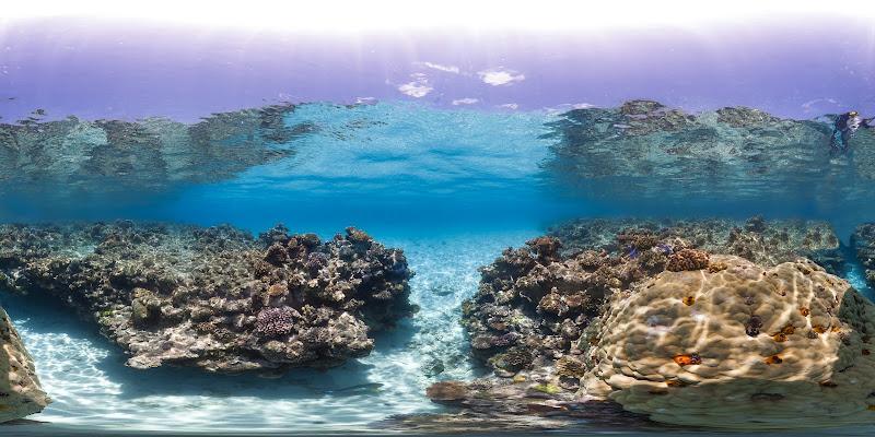 Photo: Osprey Reef