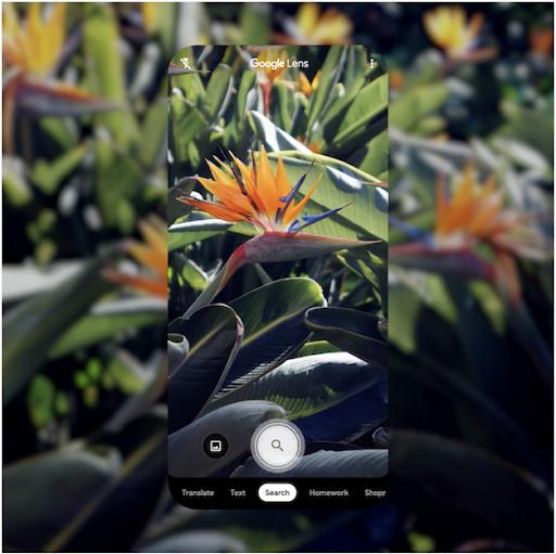 Use o Google Lens para identificar plantas e animais
