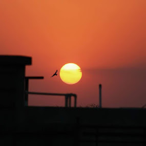 Beautiful Sunset from My Terrace by Manish Upadhyay - Landscapes Sunsets & Sunrises ( bird, canon, flying, nature, sunset,  )