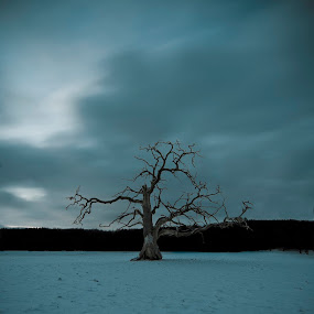 Old and Alone by Patrick Pedersen - Landscapes Travel ( vann, landscape, subtle, lonesome, norway, fredrikstad, dark blue skies, tree, blue, aqua, alone, lonely, blues, lonely tree )
