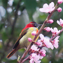 Biodiversity of West Bengal, India
