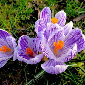 Spring by Philippe Smith-Smith - Flowers Flower Gardens ( fleur, flora, flowers, garden, spring )