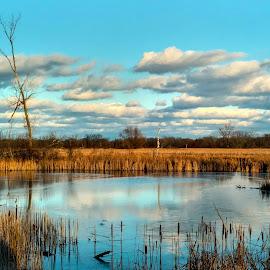 by Nancy Tonkin - Landscapes Prairies, Meadows & Fields (  )