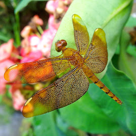 Dragonfly by Asif Bora - Instagram & Mobile Other
