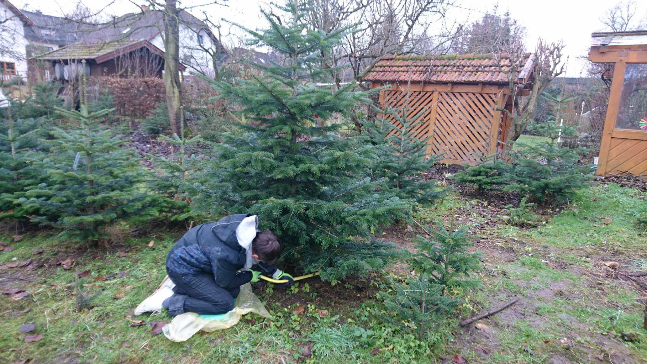 Amelunxen Weihnachtsbaum