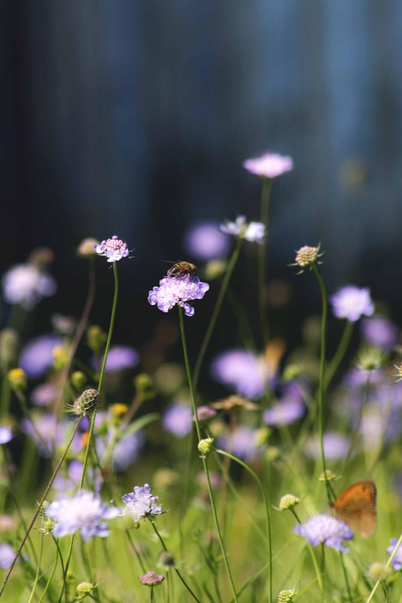the rumor of the blooming  di 🌱