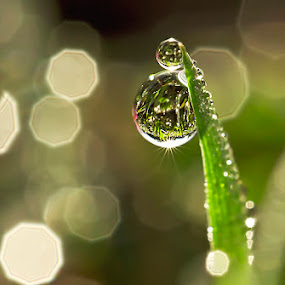 Empire the dew... by Citra Hernadi - Nature Up Close Water