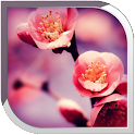 Blossom Live Wallpaper icon