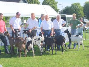 Photo: Klasse 2: 1 jarige bonte geiten. 1a. Sanne; 1b. Meintje 13; 1c. Letty van de Oude Schuur; 1d. Bella's Sarah CH; 1e. Meintje 14; 1f. Lizanne 3.