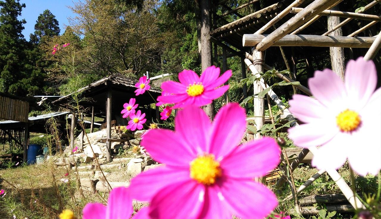 炭窯をバックに秋の花