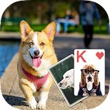 Solitaire Lovely Dogs Theme file APK Free for PC, smart TV Download