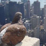 Приметы о голубях