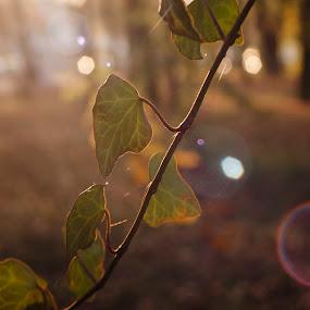by Vagabond Foto - Nature Up Close Gardens & Produce