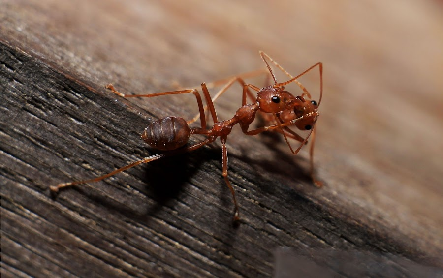 Kissing of Love by Tio Srie - Animals Insects & Spiders