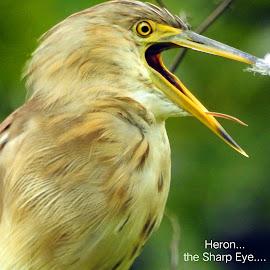 Heron...  by Asif Bora - Typography Quotes & Sentences