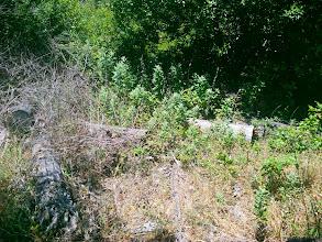 Photo: Logs left for erosion control and habitat.