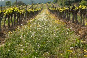 Principles of plant health: ecosystem