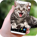 Funny Cat Walks On Screen - Cute Animation icon