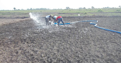 Photo: Preparation de la  parcelle SRI à Dogba Benin [2012, photo provided by Pascal Gbenou]