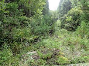 沢沿いの道に合流し林道へ(林道から見る)