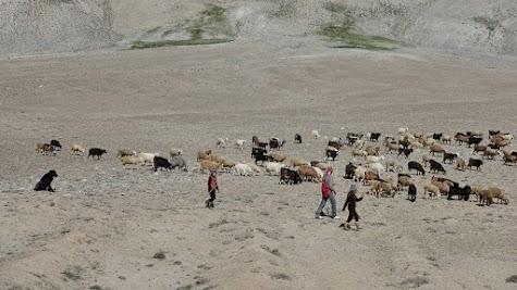 Ziegenherde in der Nähe des Khargush Pass.