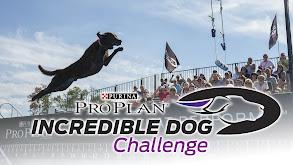 The Incredible Dog Challenge thumbnail
