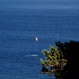 Kite surfing by Alf Winnaess - Sports & Fitness Surfing