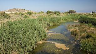 Cauce del Río Antas a su paso por Vera.