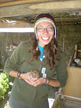 Photo: Menda, a cuy, and her Surplus dog tags.