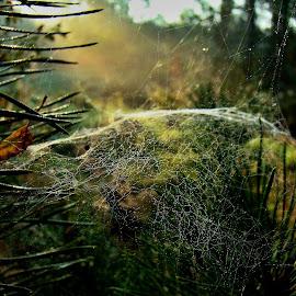 Autumn by Karel Šula - Uncategorized All Uncategorized