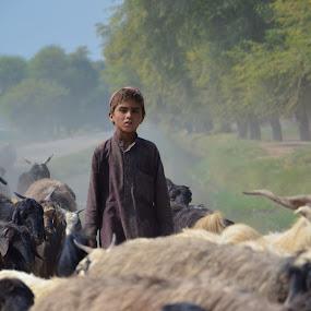 Young Shepherd by Khawaja Hamza - People Street & Candids ( shepherd, herd, poor, culture )