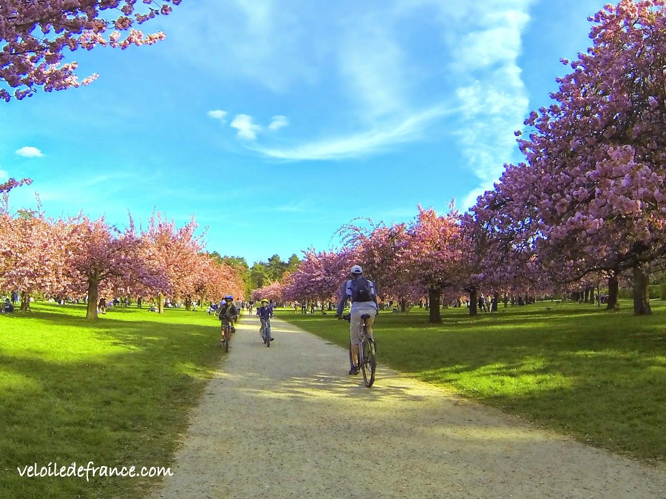 Le Bosquet Nord au Printemps - E-guide balade circuit à vélo au Parc de Sceaux et villages par veloiledefrance.com