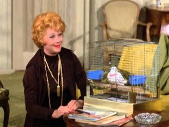 Lucy Is a Bird Sitter
