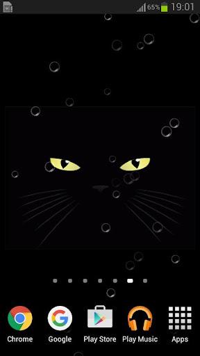 有趣的黑貓桌面
