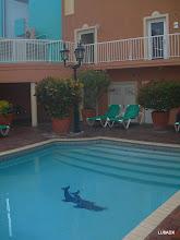 Photo: Pileta del Hotel Howard Johnson de Curazao
