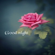Download Good Night Wishes For PC Windows and Mac
