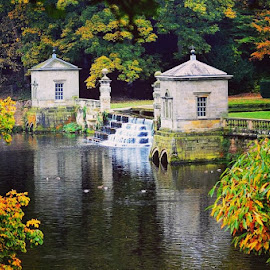 Autumn fall by Kathleen Brady - City,  Street & Park  City Parks