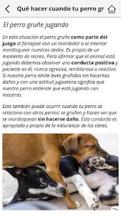 Perros: Cuidados y Educación - náhled
