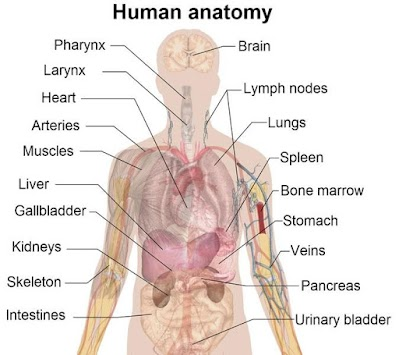 Anatomy Atlas APK screenshot thumbnail 1