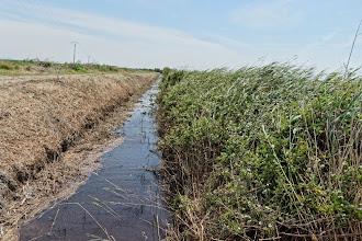 Photo: C'est l'eau de cette roubine, en limite du camp, qu'utilisaient et buvaient les familles internées de 1942 à 1944 !