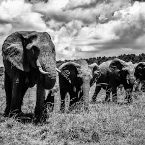 The Family by Ebtesam Elias - Animals Other ( black and white, masai mara, kenya, wildlife, travel photography )