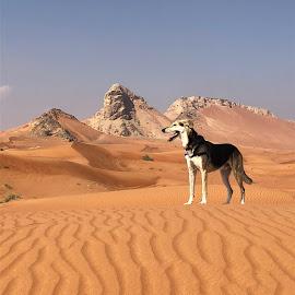 Desert dog in desert by Rebecca Rees - Animals - Dogs Portraits