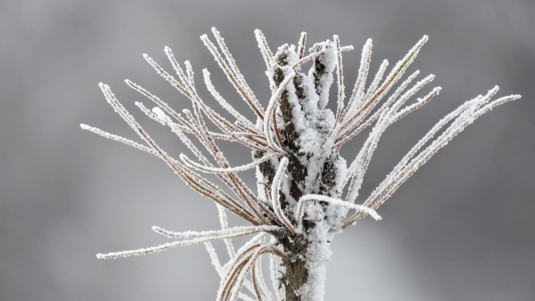 Иней — белый кристаллический осадок, образующийся на поверхности земли, траве, предметах, крышах зданий и автомобилей, снежном покрове в результате десублимации содержащегося в воздухе водяного пара при отрицательной температуре почвы, малооблачном небе и слабом ветре.