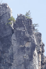 Photo: Trees growing from the vertical faces of Seneca Rocks