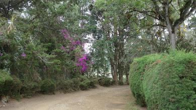 Photo: Encantos o embrujos de la naturaleza en el liceo DSC03672.JPGhttp://www.urrao.org/2012/12/liceo-simon-bolivar-crimen-lesa-naturaleza.html
